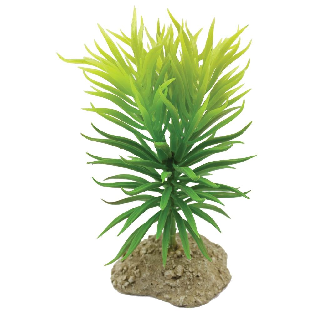 Mad Lizard 10Cm Cactus