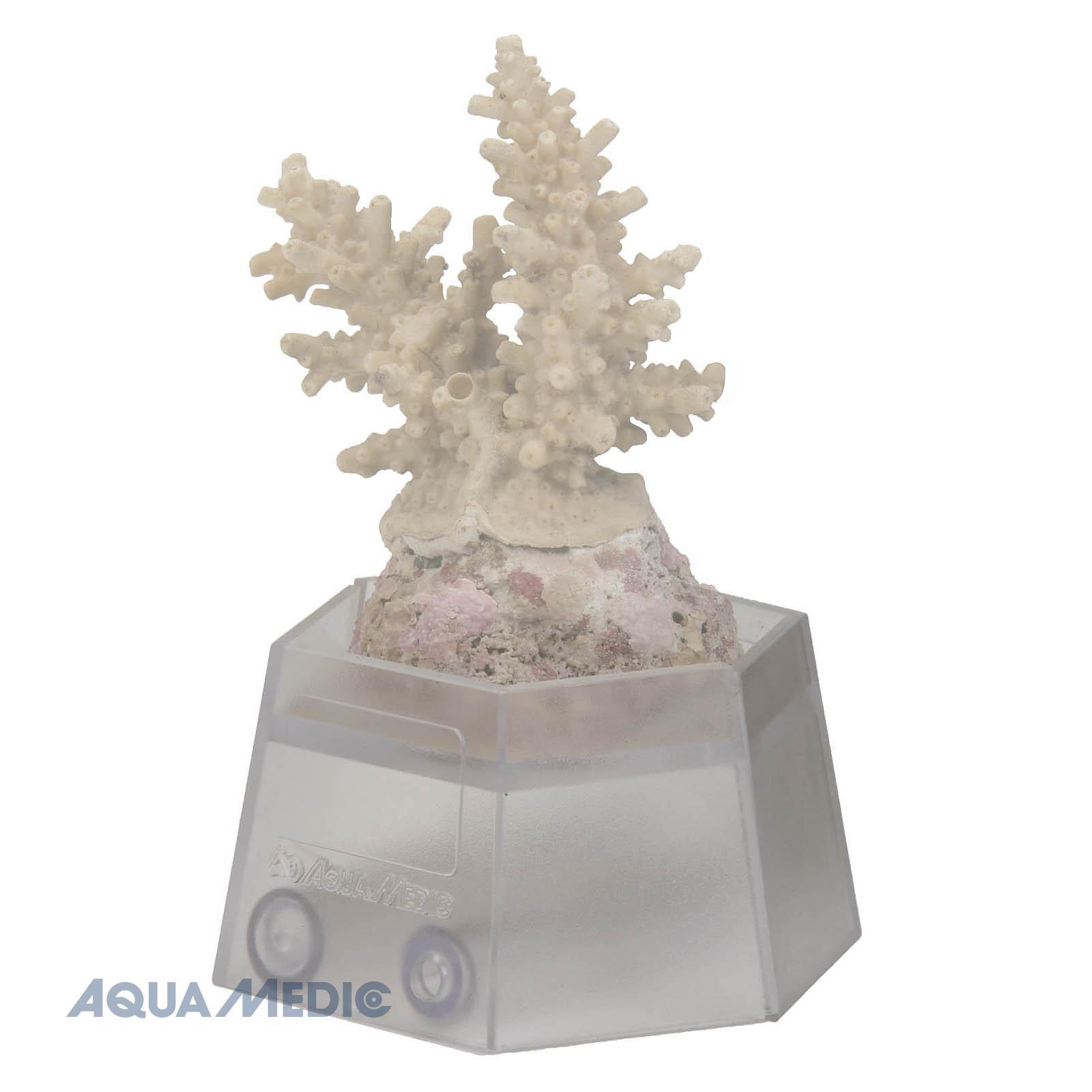 Aquamedic Coral Holder