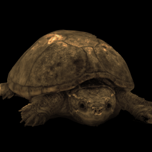 Turtle Products