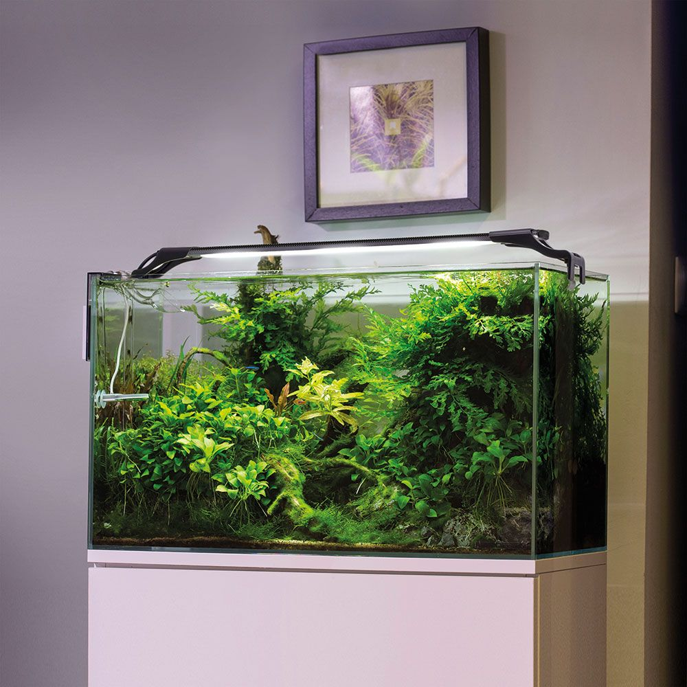 Aquael Leddy Slim Led Lighting & Aquael Leddy Slim Led Lighting - great solution for aquarium lighting