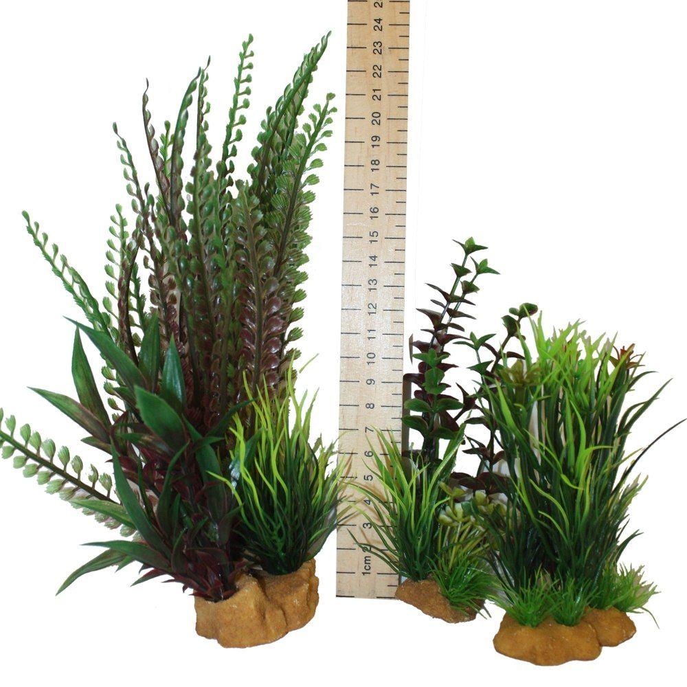 Hugo Kamishi Plant - box 3 mixed bushy plants
