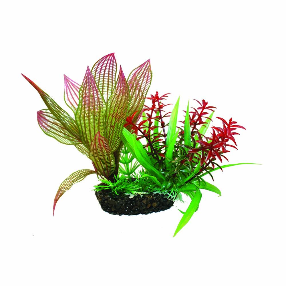 hugo kamishi plant cluster