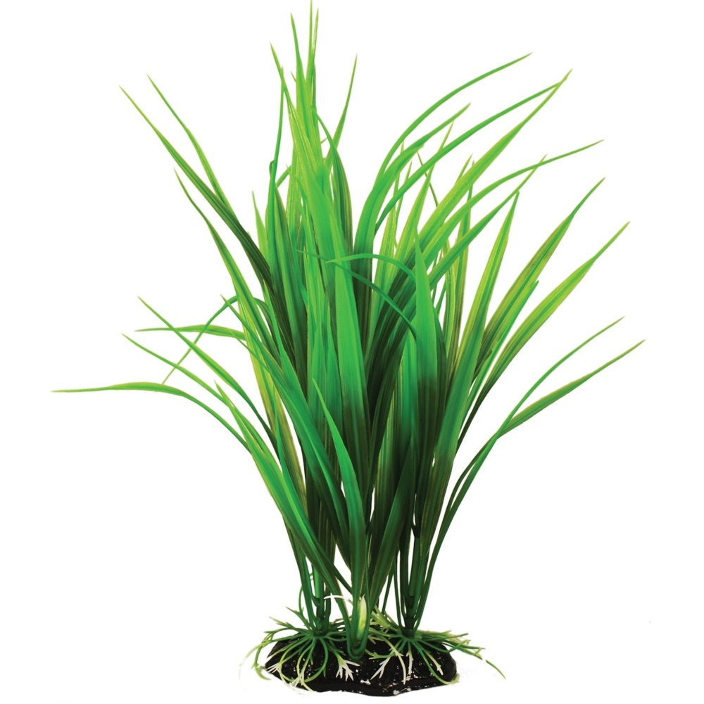 Hugo kamishi Saggitaria Green Bushy Plant