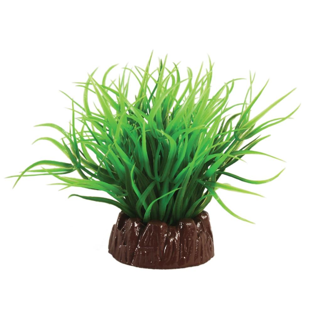 Hugo Kamishi Echinodorus Green Plant 10cm