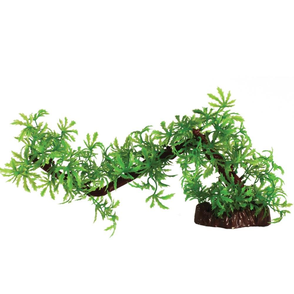 Hugo Kamishi Branch Difformis 35cm