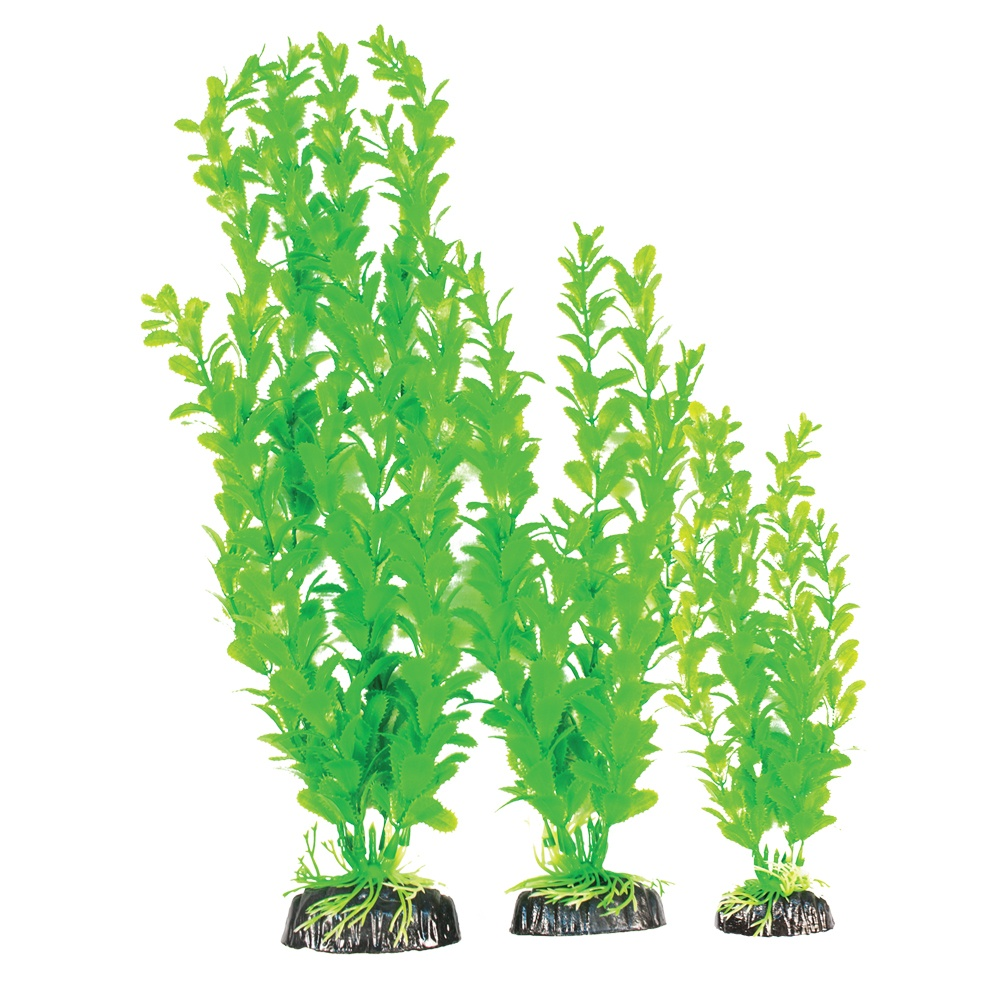 Madfish Bacopa Carolina Green