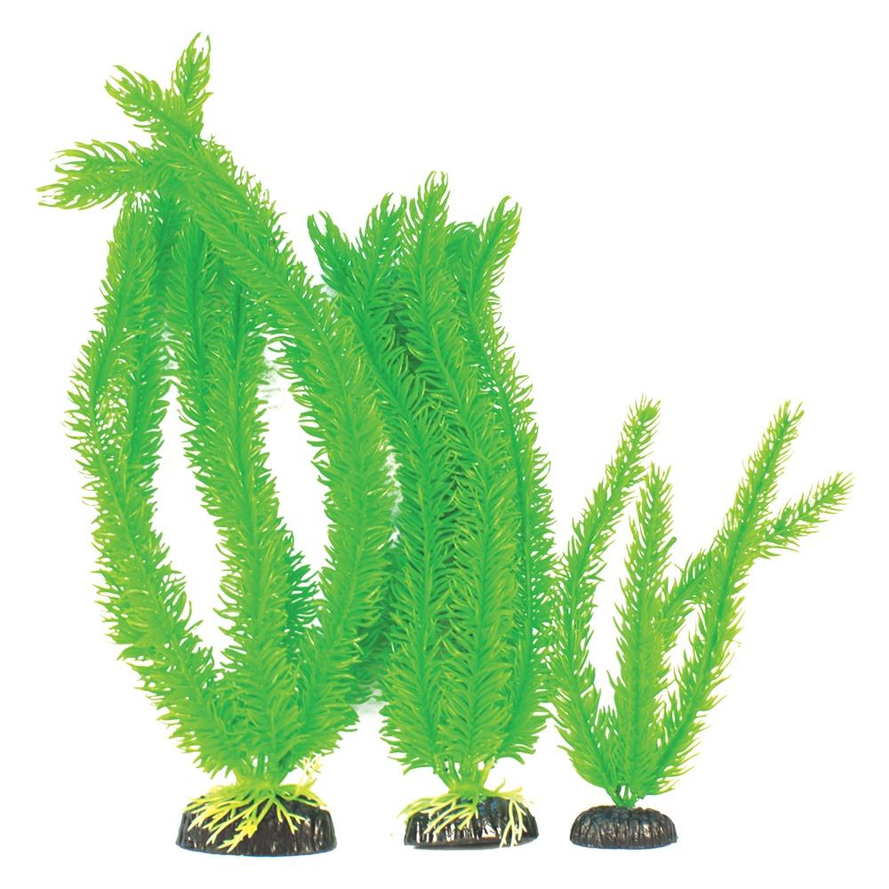 Madfish Cabomba Green