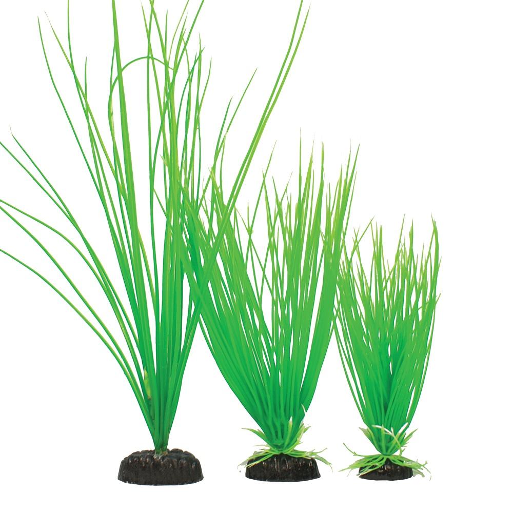 Madfish Blyxa Aubertii Green