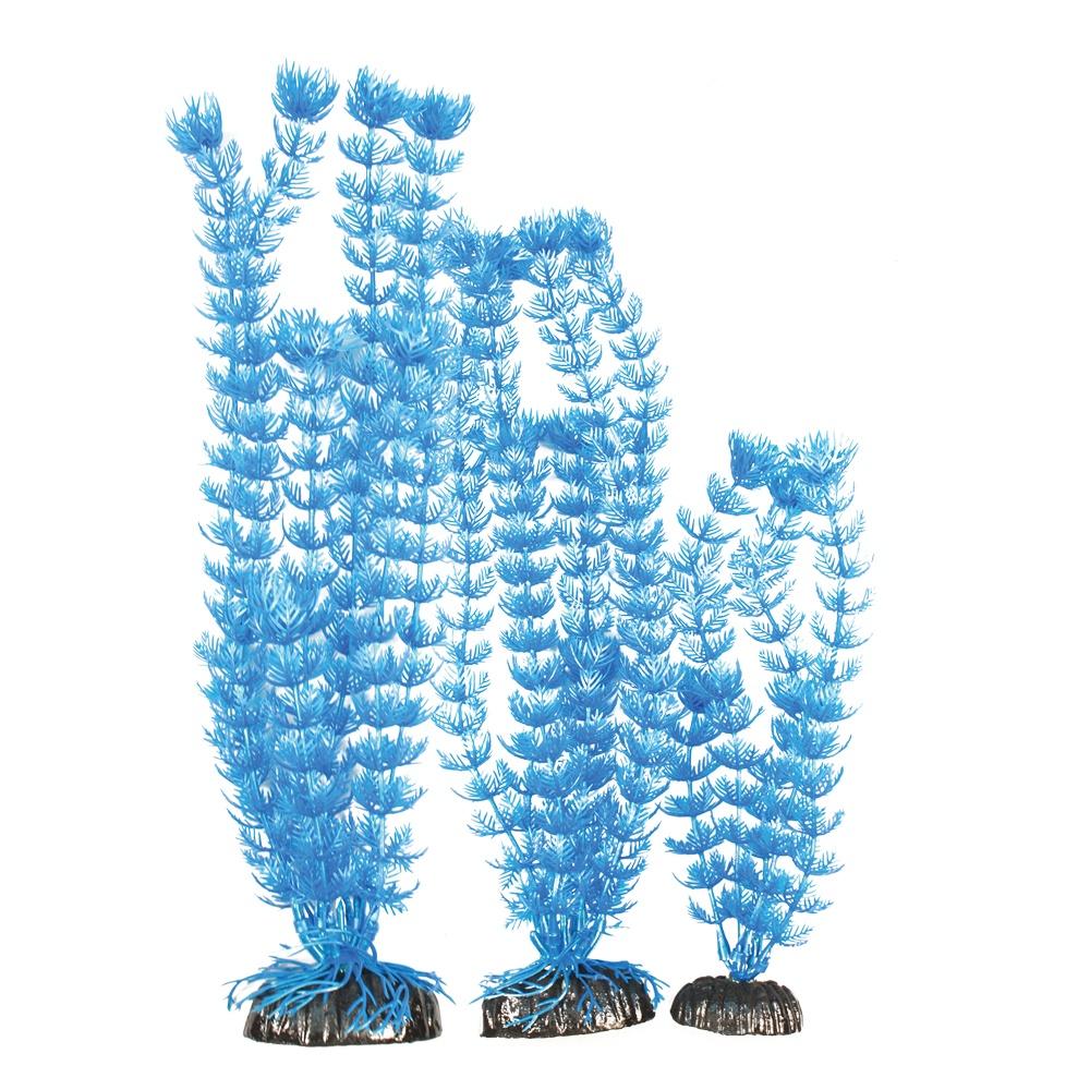 Madfish Alternanthera Blue